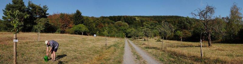 Kirschgarten giessen 2