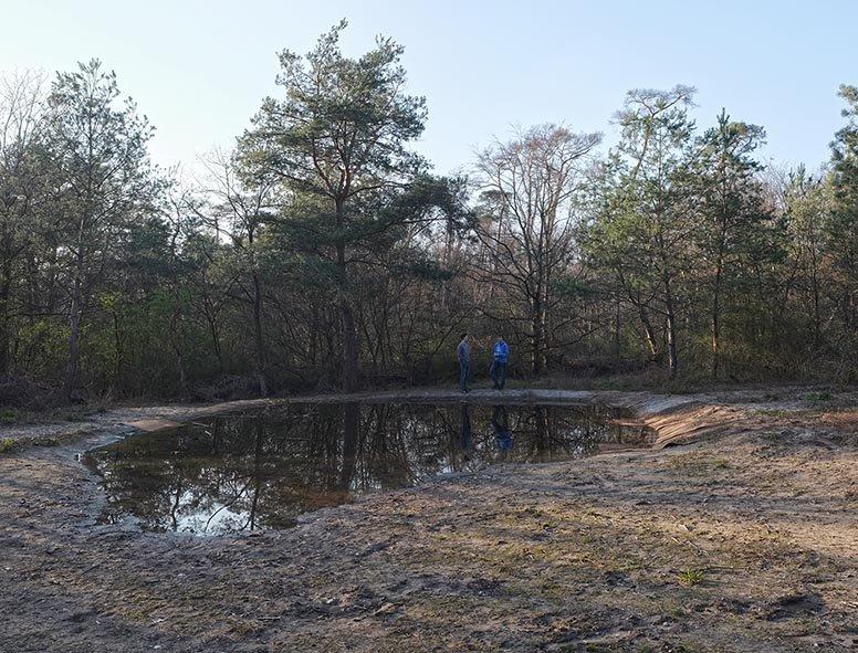 Amphibienteich-Malcher-Tanne-01-10x13s