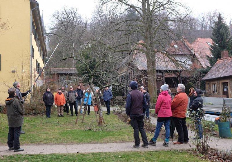 Obstschnitt-Praxis Altes Forstamt Jugenheim 05 10x14s