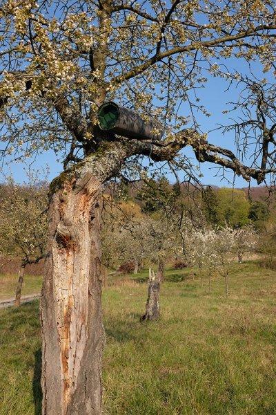 Steinkauzröhren-Kirschgarten-01-10x15s