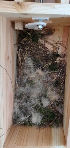 Steinkauzkästen-Hähnlein-Nest-1-10x21s