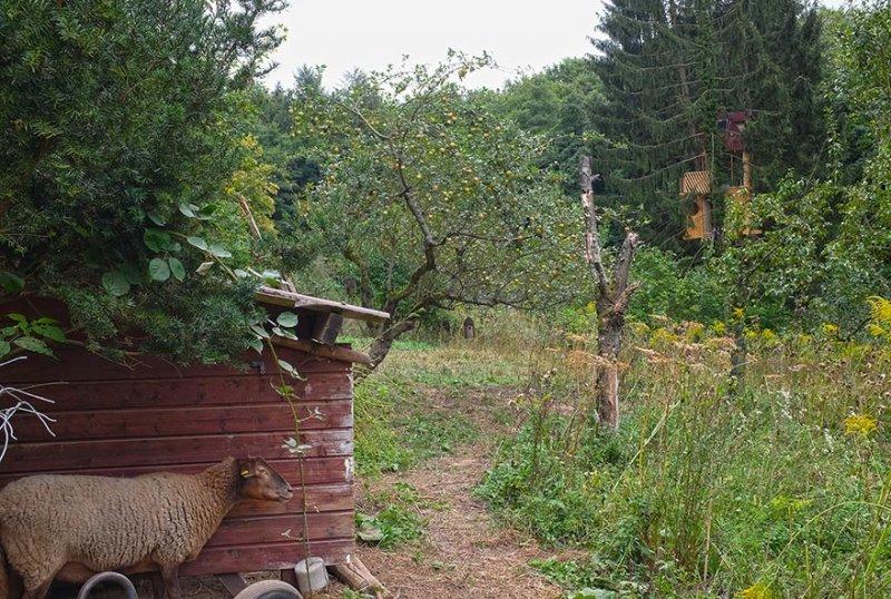 Schafstall Etzwiesen 2