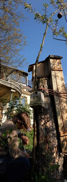 Turm der Tiere mit Vogelkasten 2