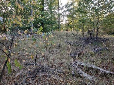 Bild 7: versteppende Waldfläche