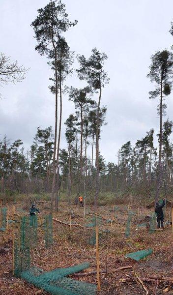 Einsatz-Schonung-Waldfriedhof-02-10x17s