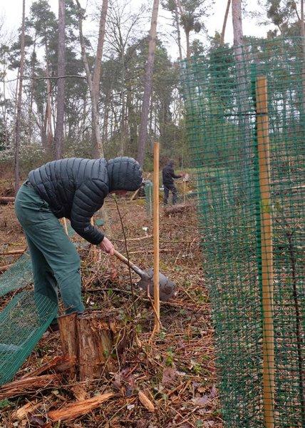 Einsatz-Schonung-Waldfriedhof-03-10x14s