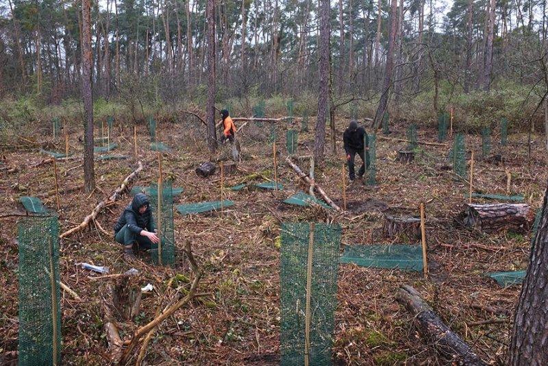 Einsatz-Schonung-Waldfriedhof-05a-10x15s