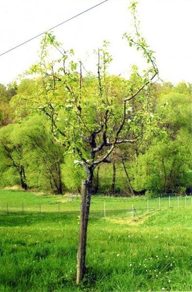 Stettbacher Tal 1
