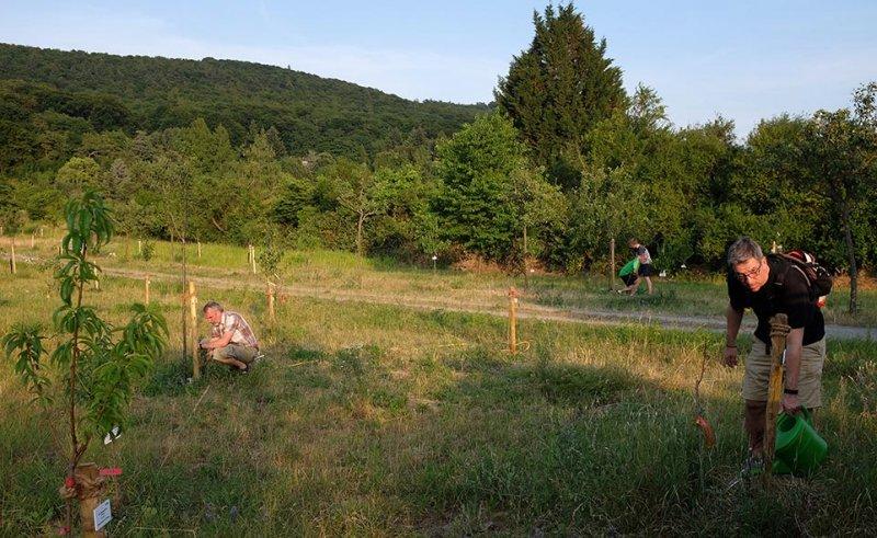 Kirschgarten 08
