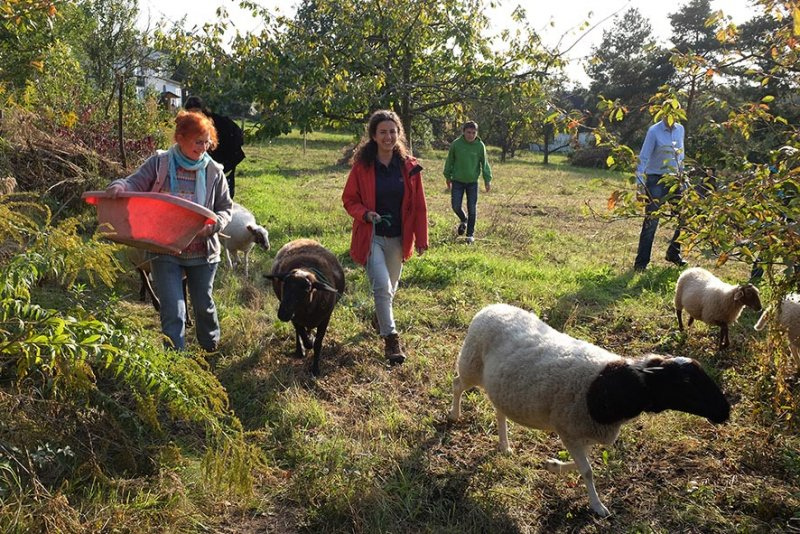 Schaf-Wanderung 08