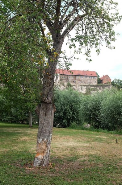 10-Biberbaum-an-der-Schleuse-Wendelstein-02-10x15s