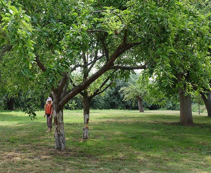 10-Biberbaum-an-der-Schleuse-Wendelstein-03-10x13s