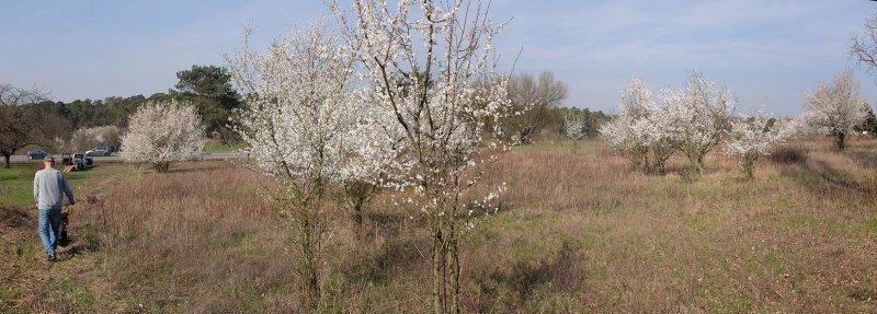 Trockenrasen-Malchen-Süd-06-10x28s