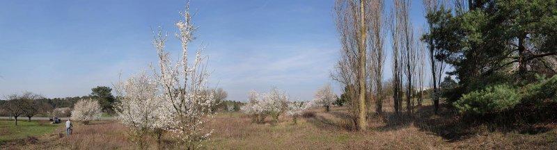 Trockenrasen-Malchen-Süd-07-10x37s