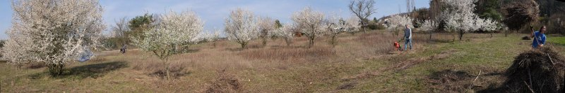 Trockenrasen-Malchen-Süd-10-10x60s