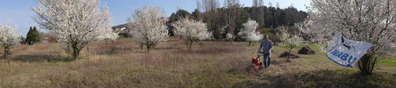 Trockenrasen-Malchen-Süd-12-10x45s