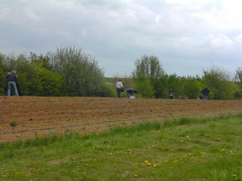 Lindenhof Kartoffeln legen 9