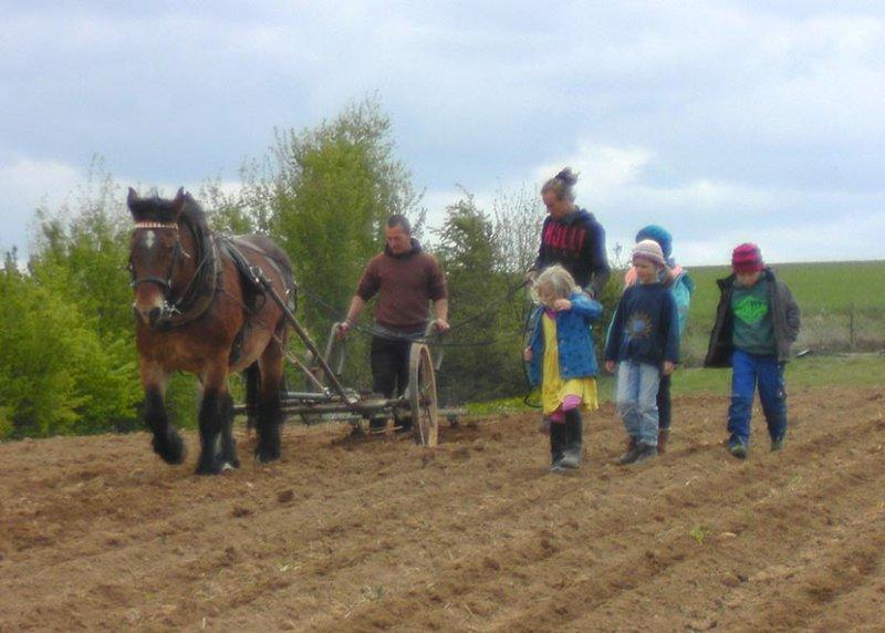 Lindenhof Kartoffeln häufeln 9