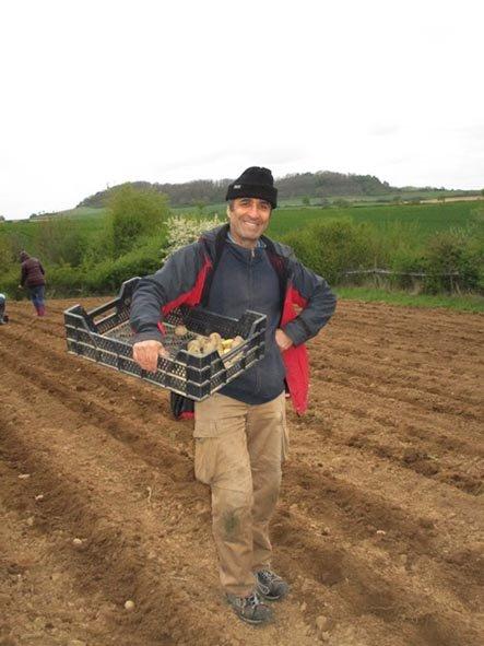 Lindenhof Kartoffeln legen 5