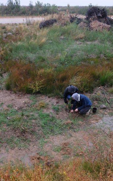 Abbruchkante zum Tagebau - Baumpflanzung 1 10x15s