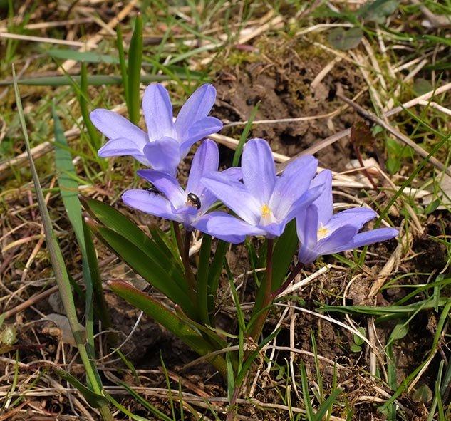Blaue-Blüte-Etzwiesen-3-10x10s