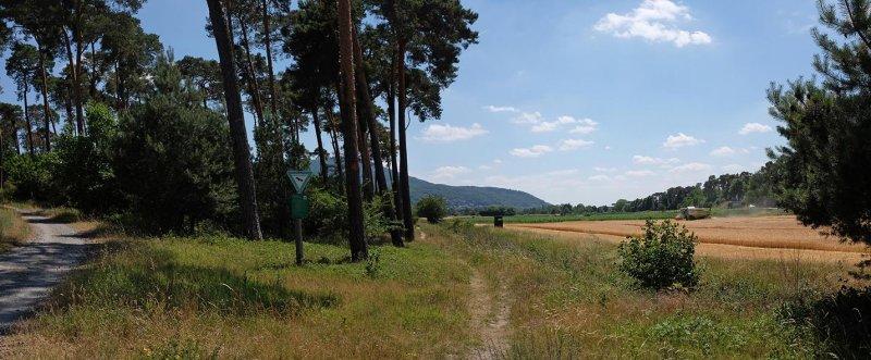 Bickenbacher Düne 3