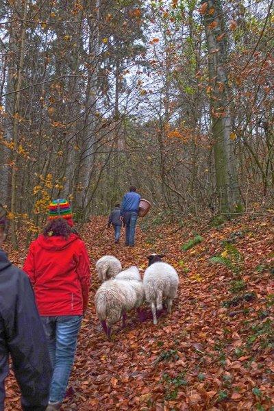 NABU-Schafe im Wald 1