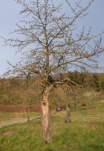 Steinkauzröhren-Kirschgarten-20-10x15s