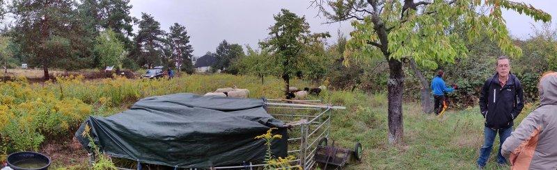 07-Einsatz-Bienenweide-Schafstall-02-10x33s