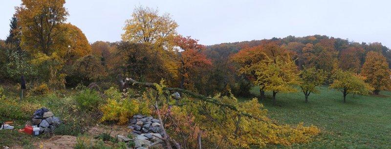 NABU-Grundstück Baumschnitt 07