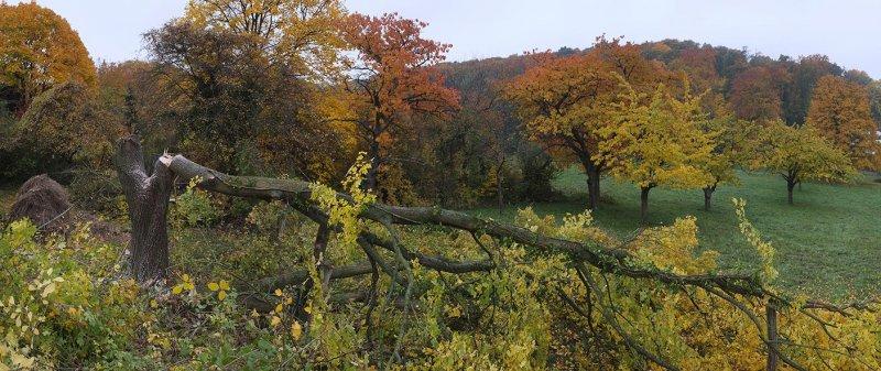 NABU-Grundstück Baumschnitt 08