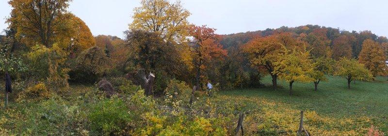 NABU-Grundstück Baumschnitt 10