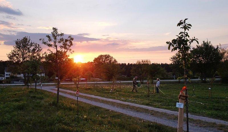 Kirschgarten giessen 4