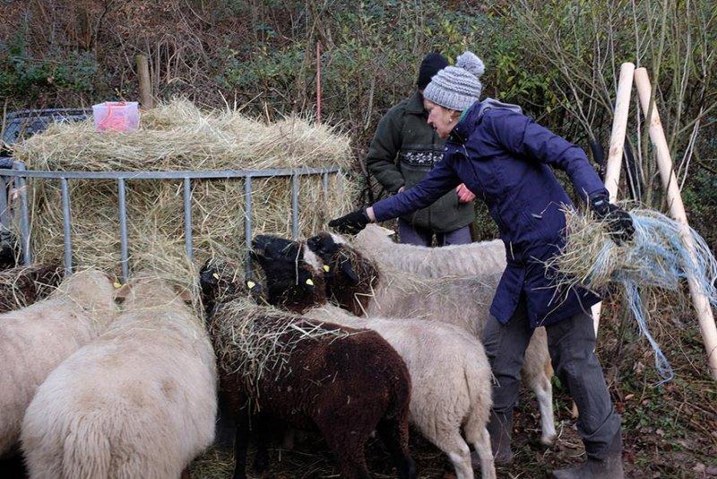 Schafe-auf-den-Etzwiesen-14-Heuballen-10x15s