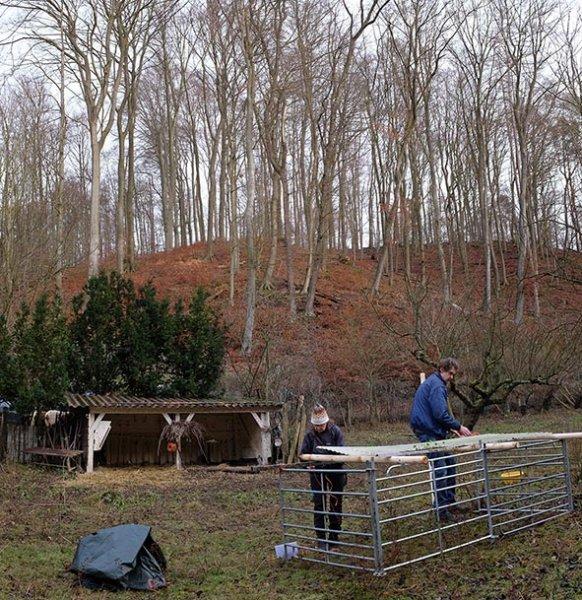 Schafe-auf-den-Etzwiesen-20-Stall-10x11s