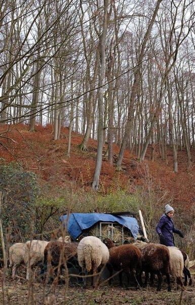 Schafe-auf-den-Etzwiesen-22-Heuballen-10x16s