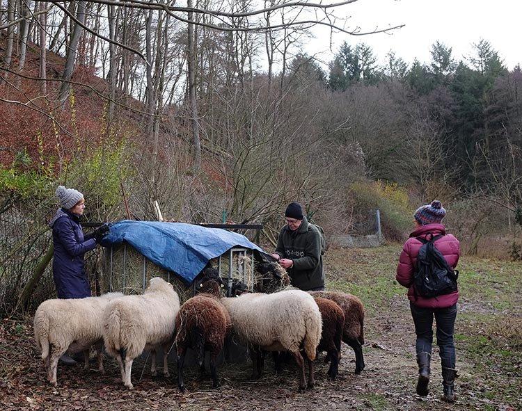 Schafe-auf-den-Etzwiesen-24-Heuballen-10x13s
