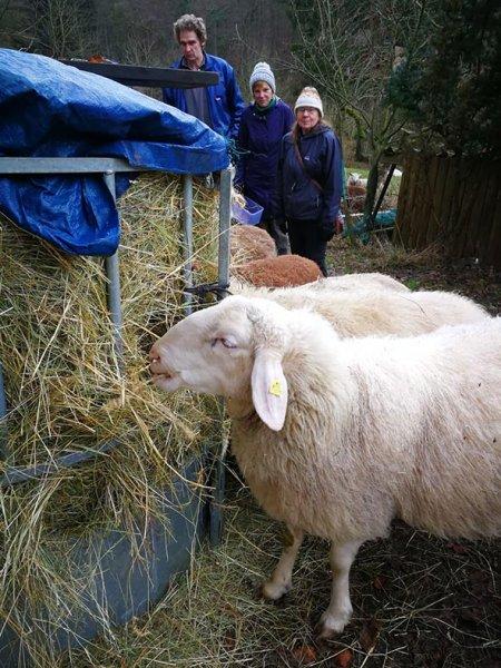 Schafe-auf-den-Etzwiesen-27-Heuballen-10x13s