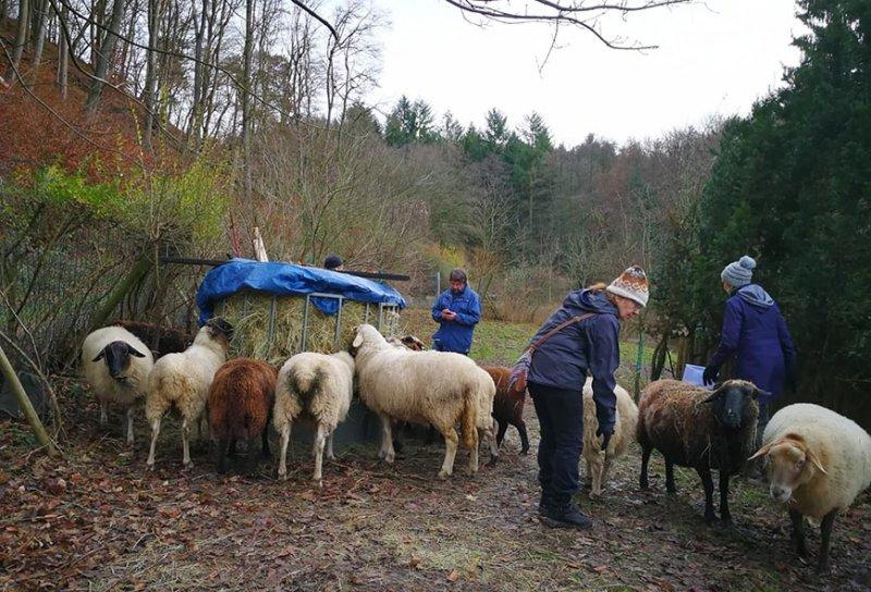 Schafe-auf-den-Etzwiesen-28-Heuballen-10x15s