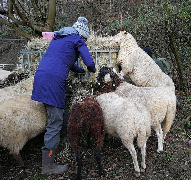 Schafe-auf-den-Etzwiesen-29-Heuballen-10x10s