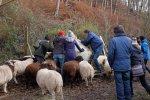 Schafe-auf-den-Etzwiesen-03-Heuballen-10x15s