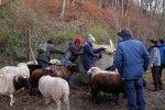 Schafe-auf-den-Etzwiesen-04-Heuballen-10x15s