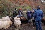 Schafe-auf-den-Etzwiesen-05-Heuballen-10x15s