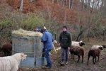 Schafe-auf-den-Etzwiesen-13-Heuballen-10x16s
