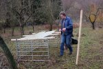 Schafe-auf-den-Etzwiesen-18-Stall-10x13s