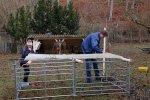 Schafe-auf-den-Etzwiesen-19-Stall-10x13s