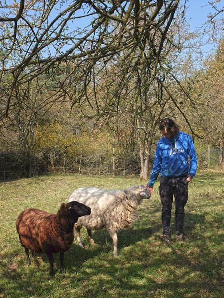 NABU-Schafe-Böckchen-Weide-01-10x13s