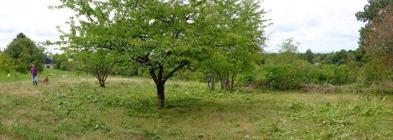 Götterbaum-Weide Mahd 3