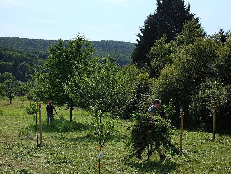 Kirschgarten 05