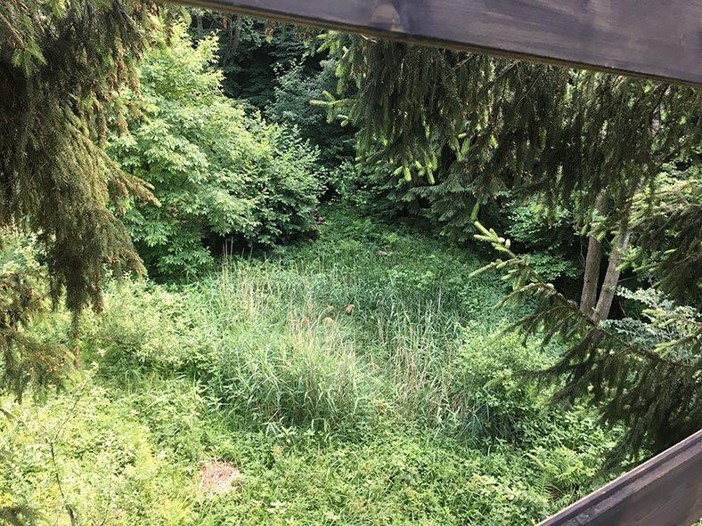Blick Baumhaus Etzwiesen 2 10x13s